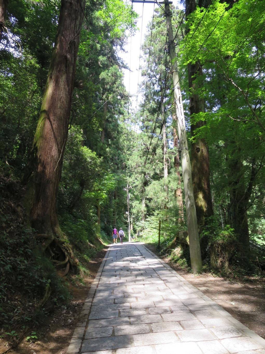 1号路 杉並木