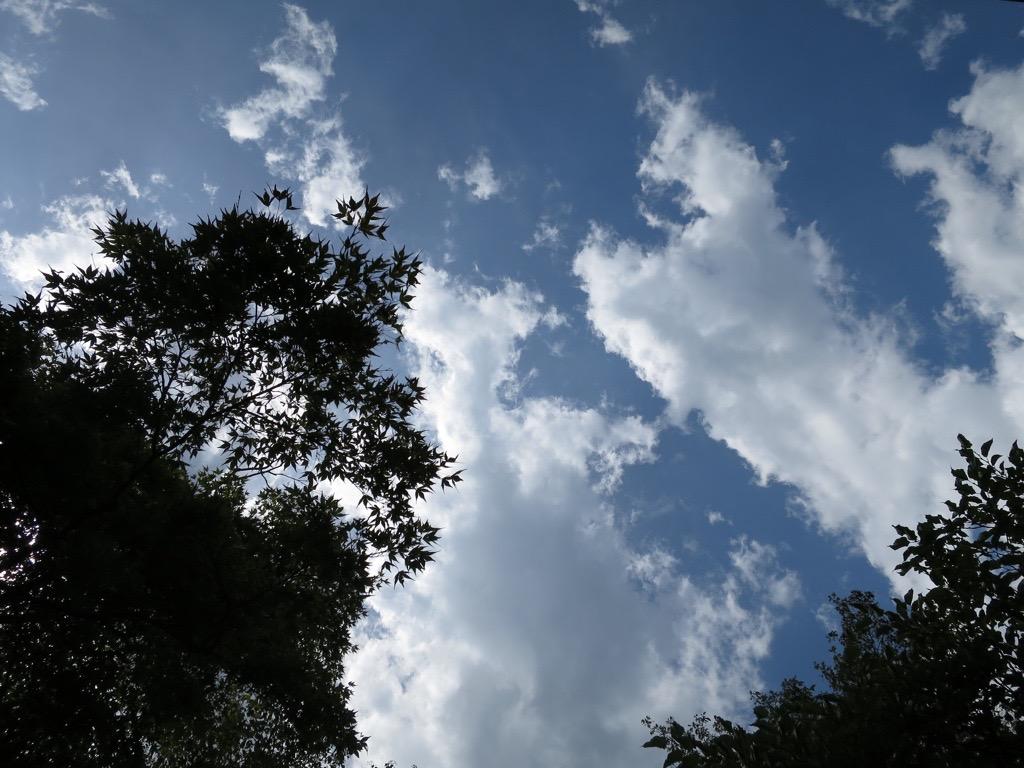 高尾山頂上から寝そべって見た雲