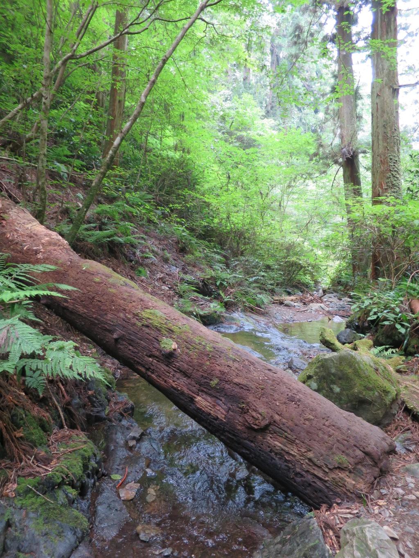 川に横たわる朽木
