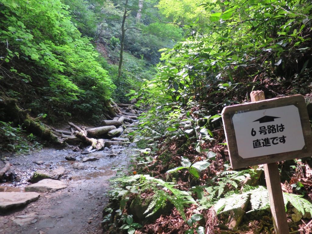 6号路 沢への登り口