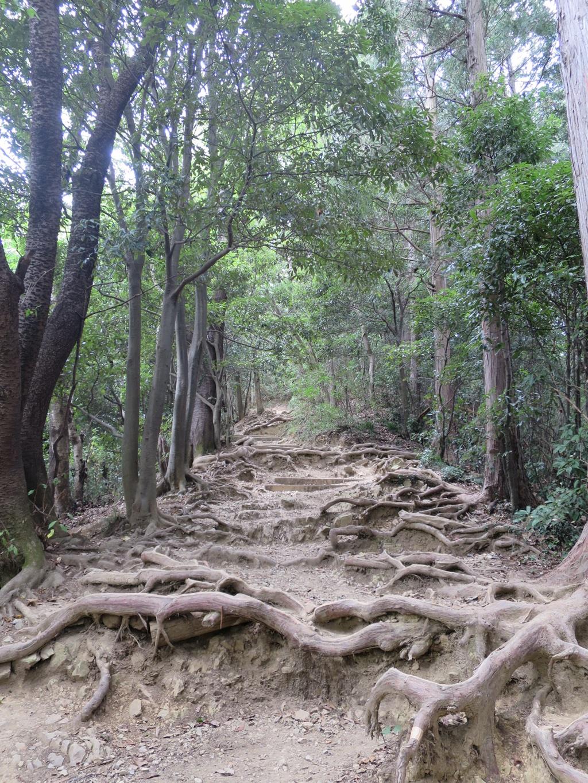 稲荷山コース 根っこの多い道