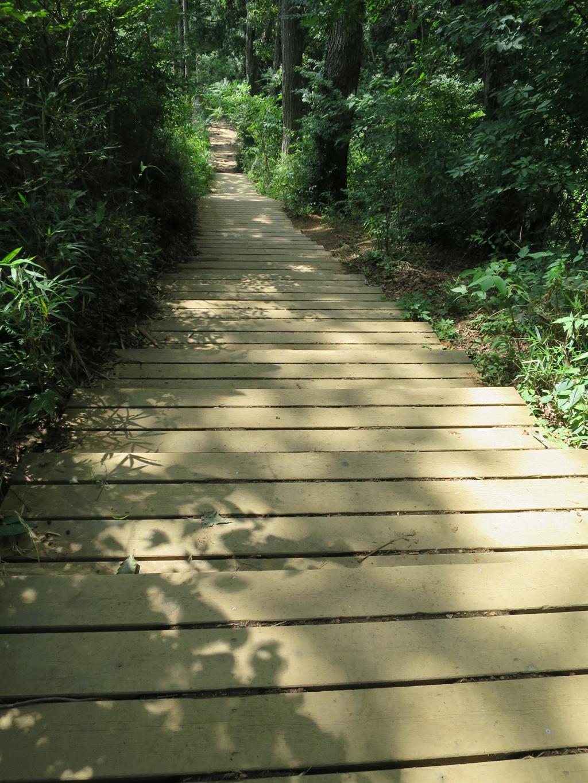 稲荷山コース木道