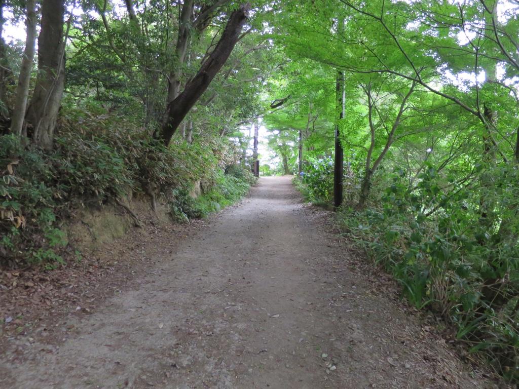 金毘羅台に向かう素敵な道