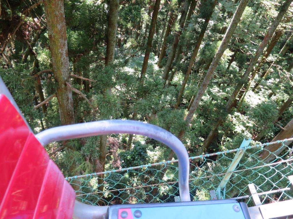 樹上のリフト