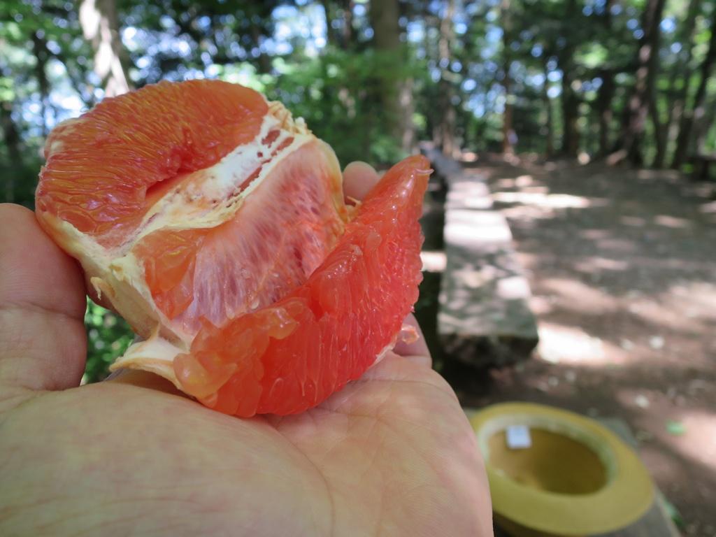 肉厚なまるえつのグレープフルーツ