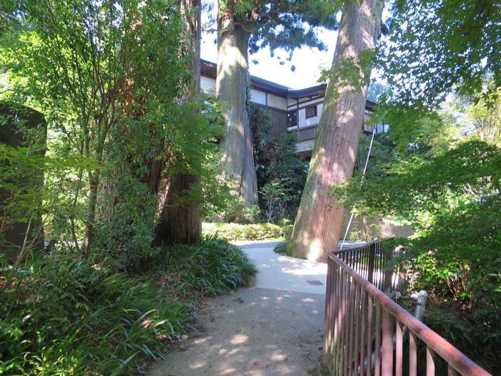 薬王院付近の大きい杉