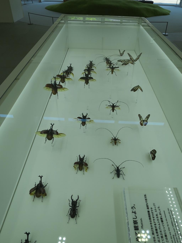 カブトムシなどの標本
