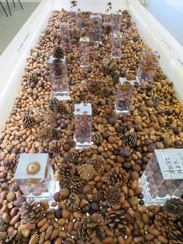 木の実が触れる展示