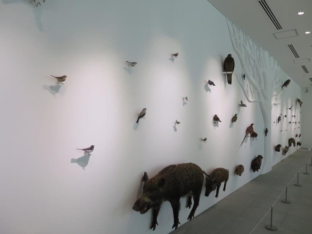 日本の動物剥製