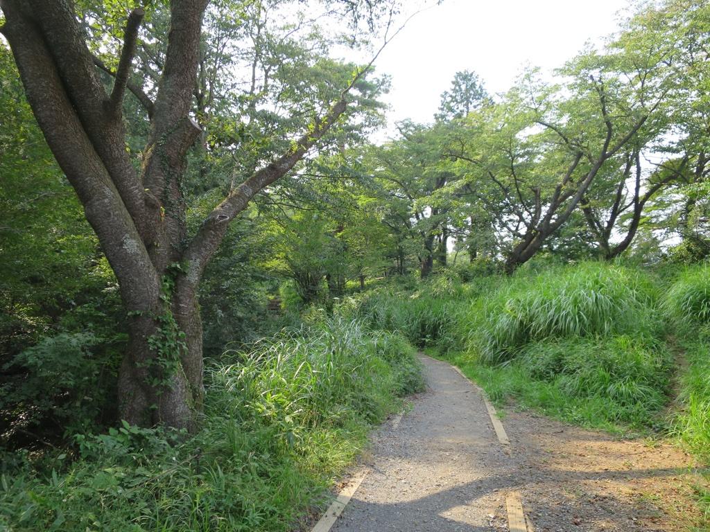 小仏城に向かう桜並木
