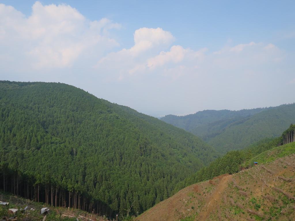 周り山の杉林